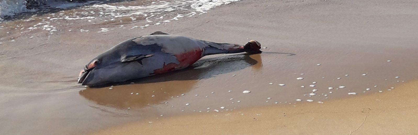 Дельфины на берегу в Крыму