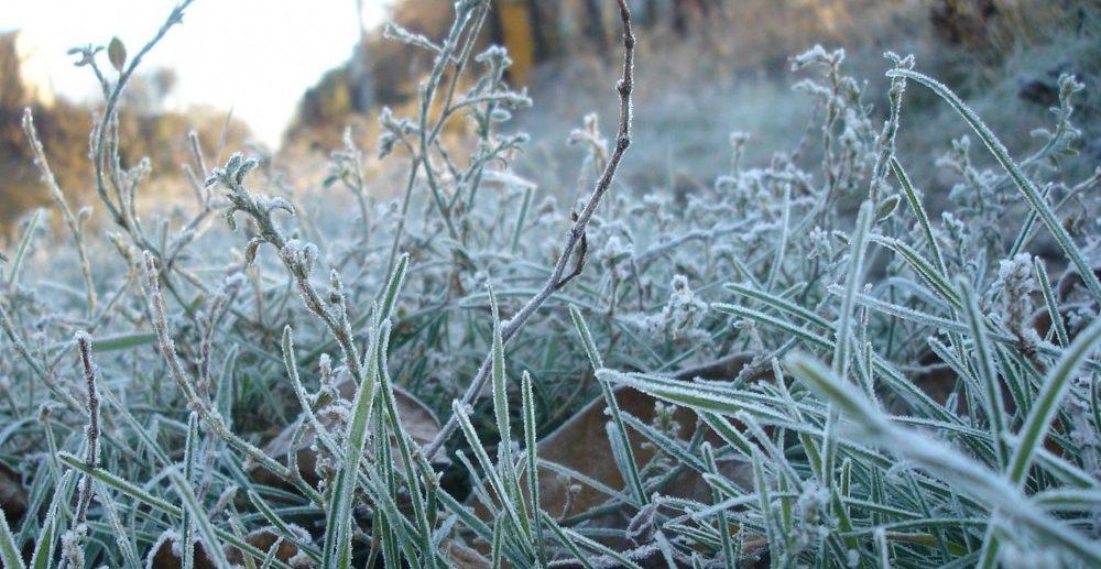 Заморозки в Крыму