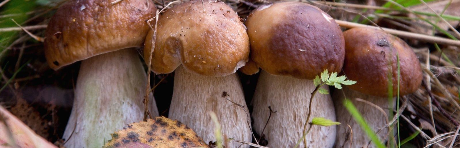 Грибы в Крымских лесах фото