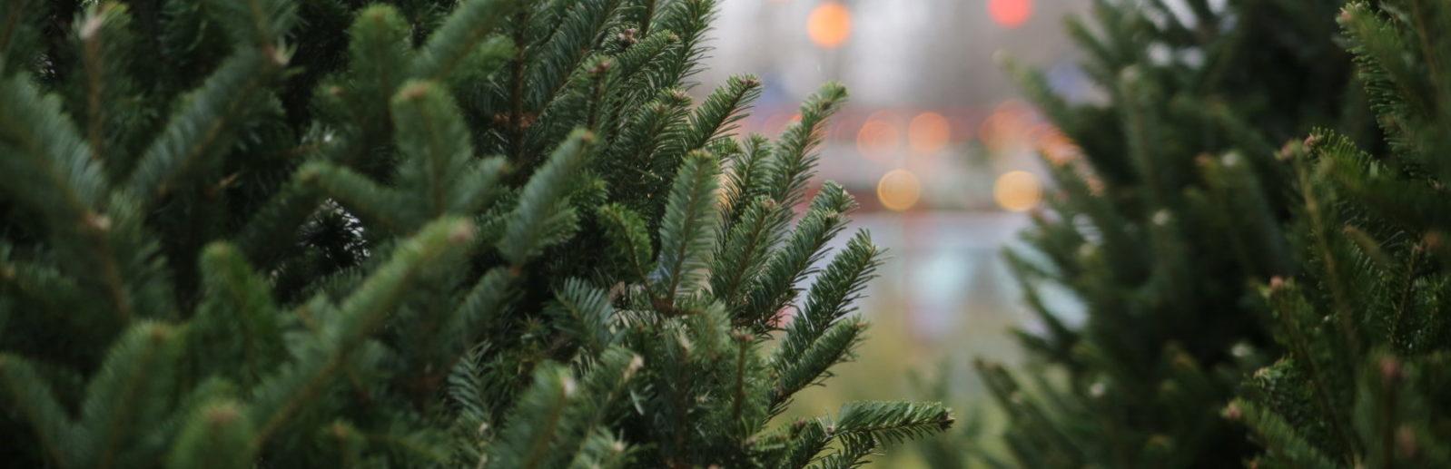 купить елку в крыму симферополь