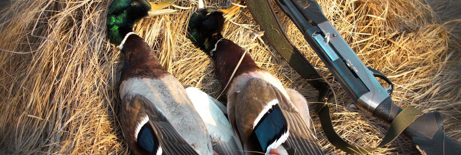 охота в Крыму белогорск зуя
