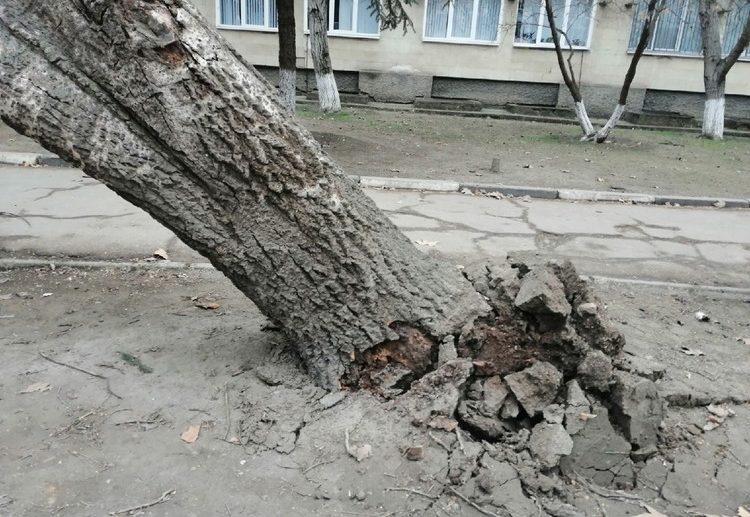 В Симферополе ветер повалил деревья
