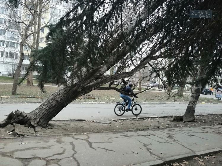 В Симферополе ветер повалил деревья с корнями фото