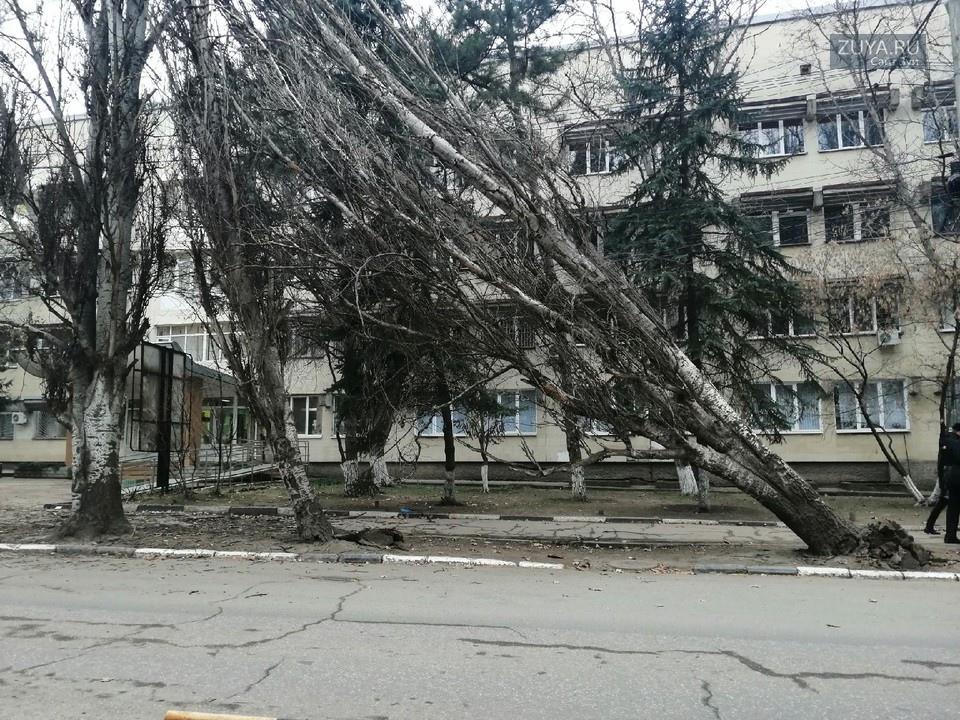 В Симферополе ветер повалил деревья с корнями
