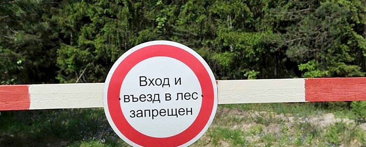 Посещение лесов в Крыму