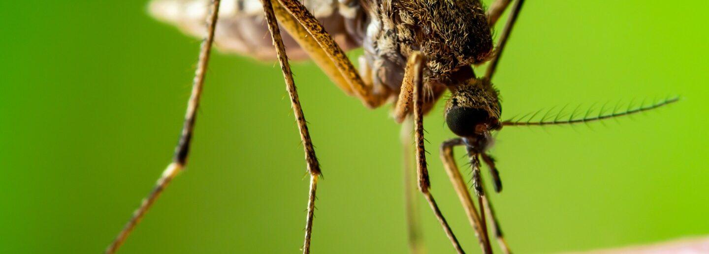 где комары в Крыму