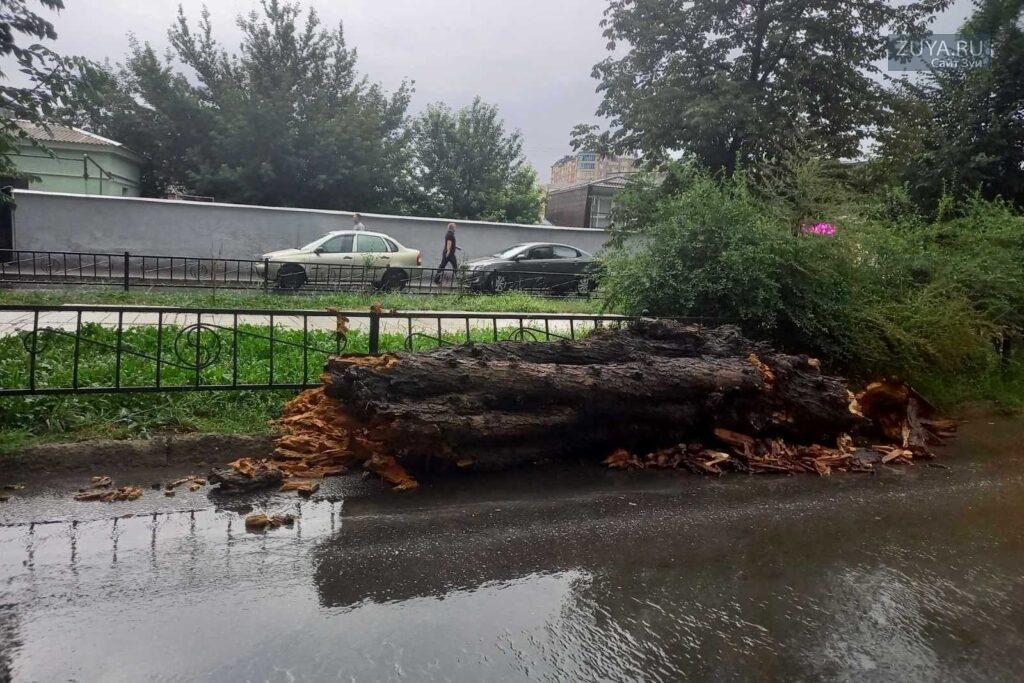 В симферополе упало дерево